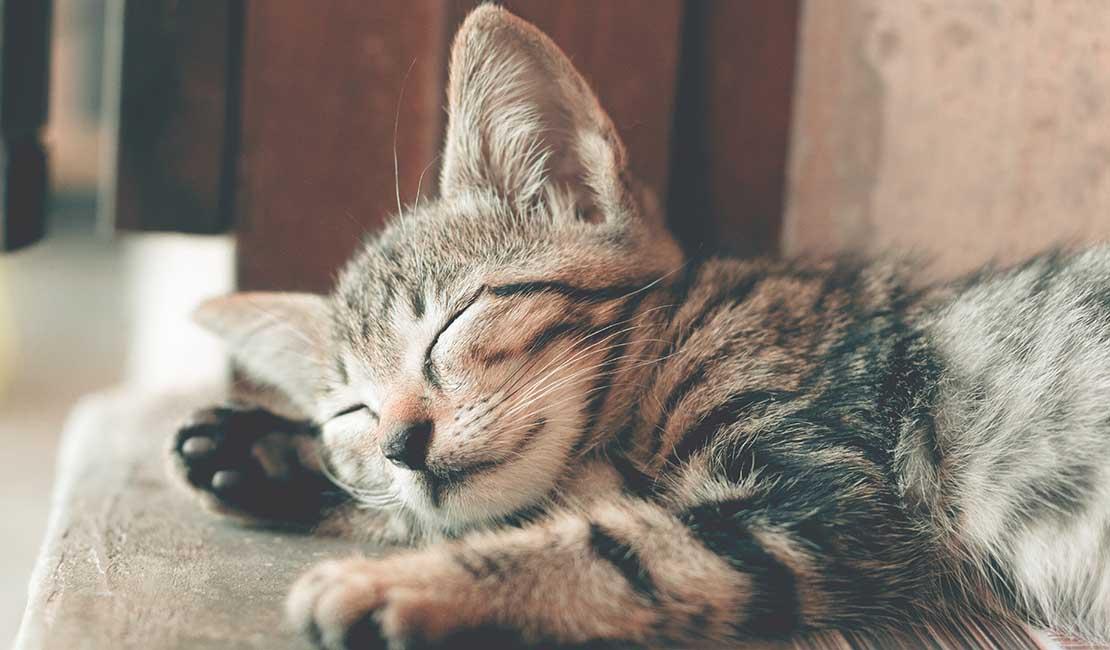 kitten on side