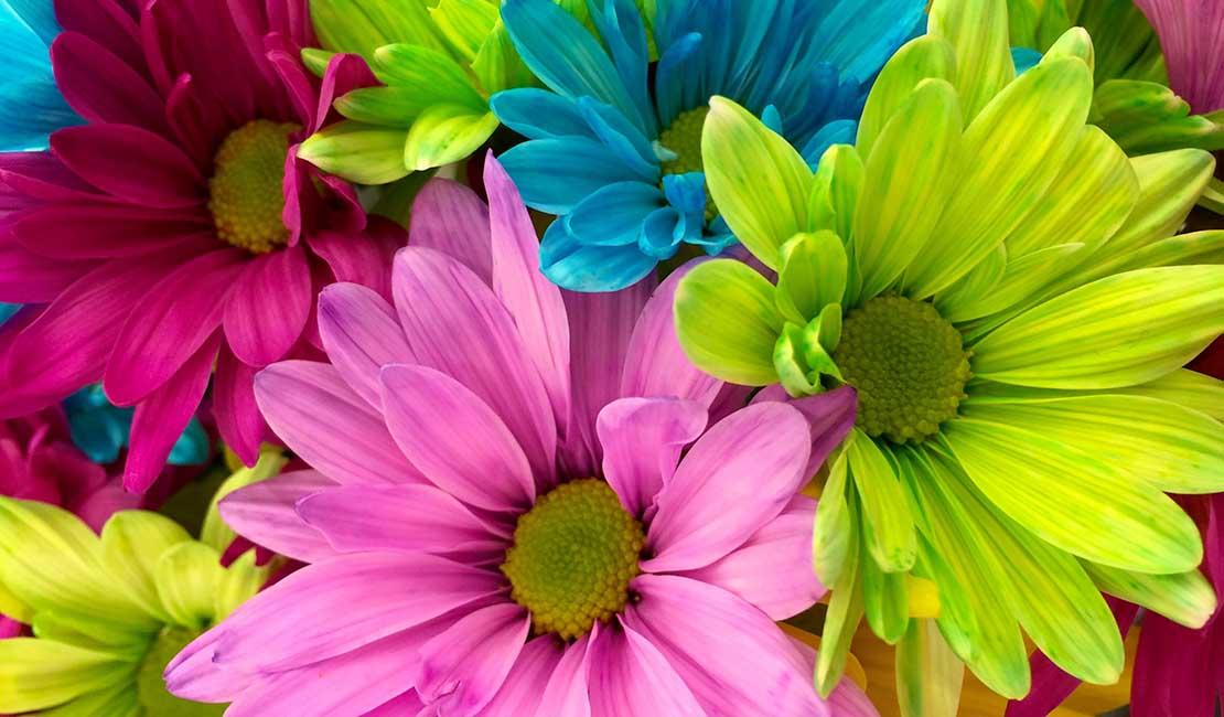 Pastel coloured flowers
