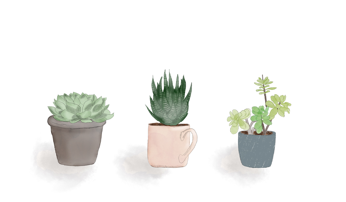 Various succulents drawing © Minette Meijer