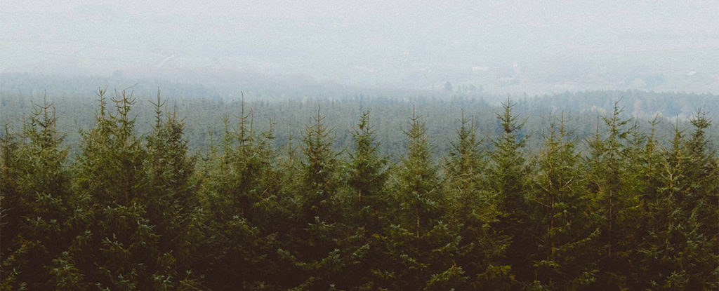 forest, trees, evergreen