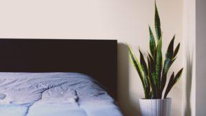 plants in your bedroom